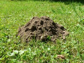 D couvez ici la solution contre les taupes et rats taupiers for Taupe dans le jardin